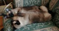 Zorka Višnjić-Ramshaw: Avantura jedne mačkarke